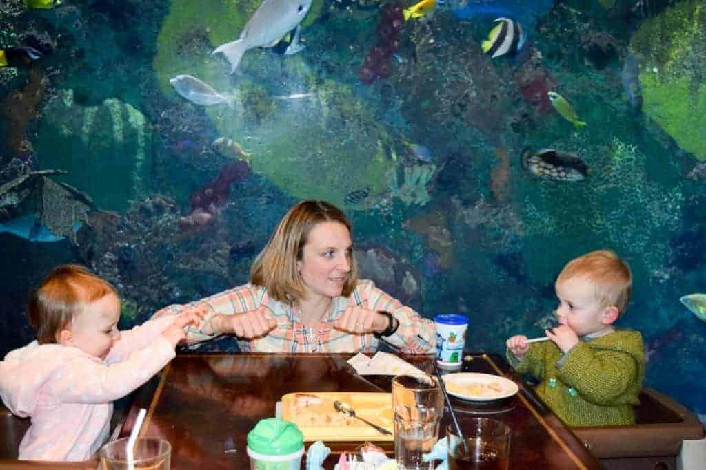 denver-aquarium-1