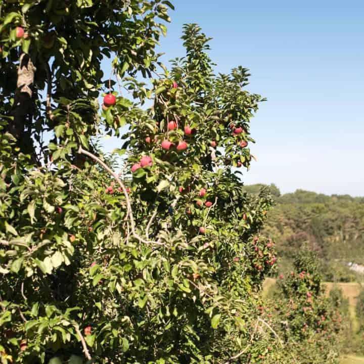 Honey Pot Hill Orchards