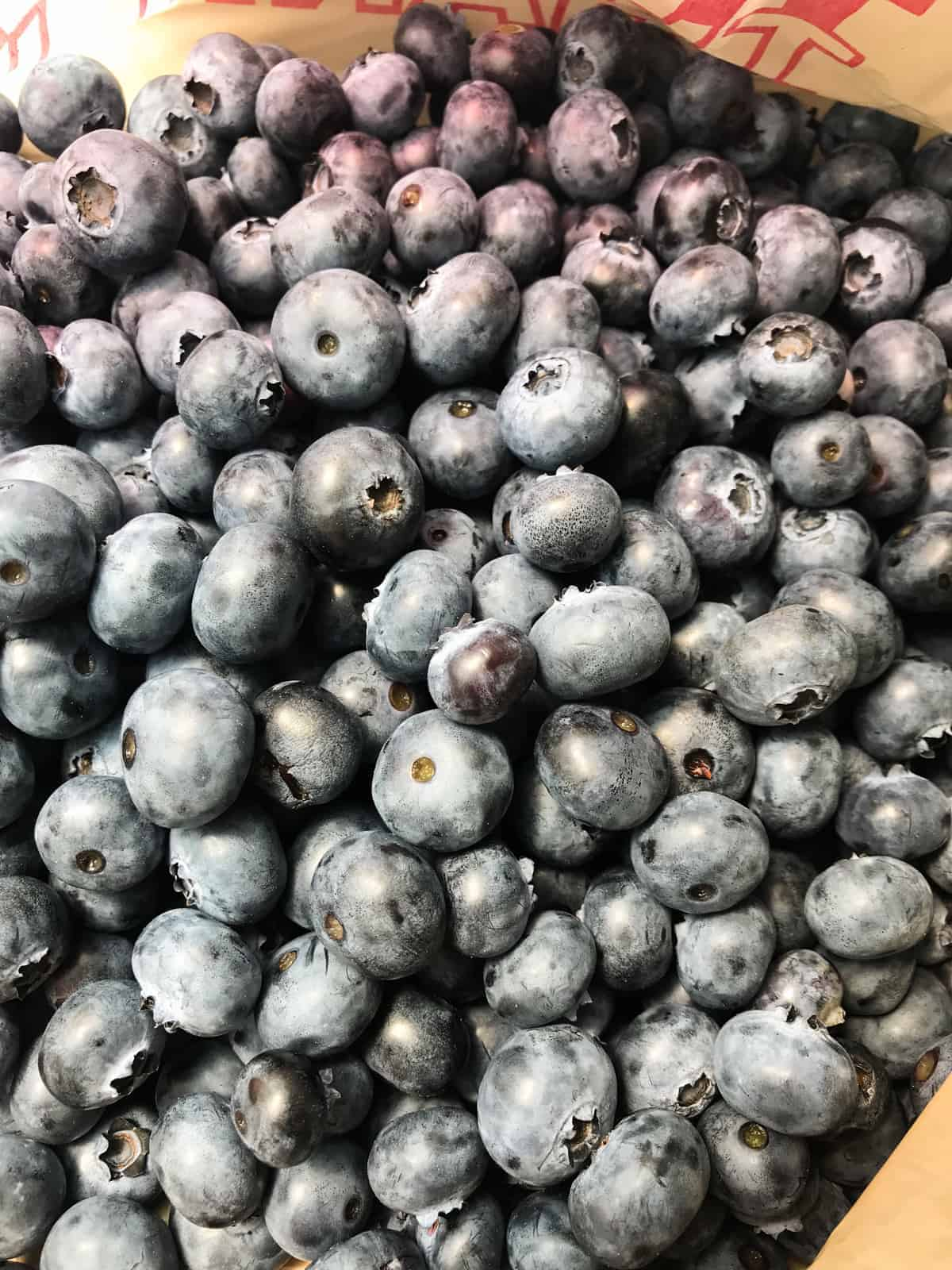 Harvey's Farm Pick Your Own Blueberries