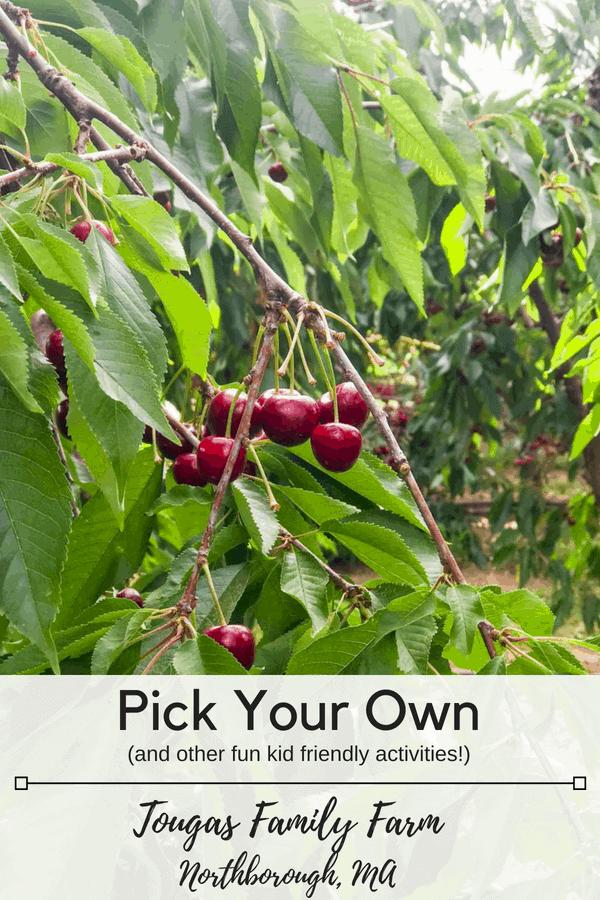 Kid friendly summer fun at Tougas Family Farm in Northborough Massachusetts. #pickyourown #localproduce #freshberries #summerfun #newenglandsummer #thingstodomassachusetts